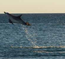 I can fly!!! Dolphin Jump Sticker