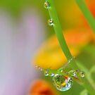 Garden Waterdrops 3 by relayer51