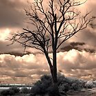 Dead tree by BigAndRed