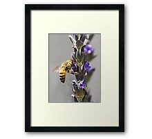 Mr. Bumble In the Lavender Framed Print