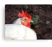 Chicken at Llwyn-yr-eos Farm Canvas Print