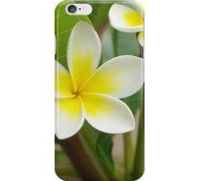 Frangipani Sun iPhone Case/Skin