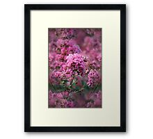 Playful Summer Pinks Framed Print