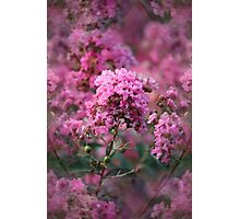 Playful Summer Pinks Photographic Print
