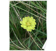 Flower 11 Poster