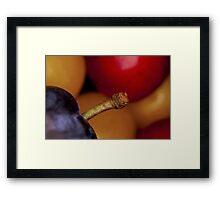 Wild plums Framed Print
