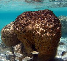 """Stromatolites in Hamelin Pool"" Shark Bay, Western Australia by wildimagenation"