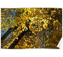 Golden Canopy - Look Up to the Trees and Enjoy Autumn - Horizontal Left Poster