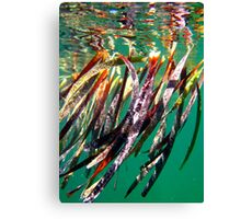 """Seagrass"" Shark Bay, Western Australia Canvas Print"