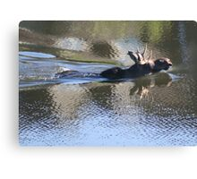 Swimming Moose Canvas Print