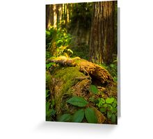 Fallen Tree Brings New Life Greeting Card