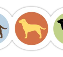Labrador Retrievers: Chocolate, Yellow, Black Sticker