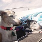 Canine Boat Cruise by CWCards2013