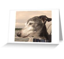 Old Dog of the Bass River Greeting Card