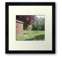 Summer Stroll Framed Print