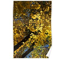 Golden Canopy - Look Up to the Trees and Enjoy Autumn - Vertical Left Poster