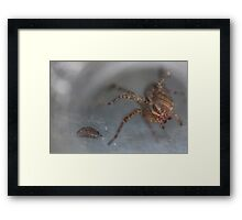 Spider and Bug Framed Print