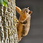 Squirrels are Awesome! by Keala