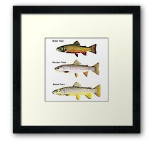 Three Breeds of Trout Framed Print