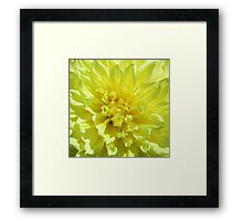 Flowers - 1 Framed Print