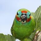 Cyclops bird (native to Australia) by cathywillett