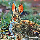 Cottontail Rabbit by Bunny Clarke