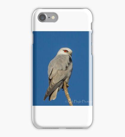 Black shouldered Kite iPhone Case/Skin