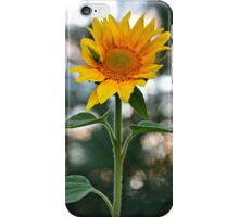 Sunflower iPhone Case/Skin