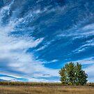 Blue Skies Sing Of Trees by nikongreg