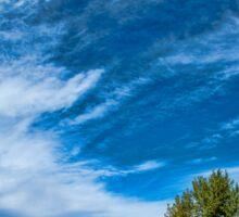Blue Skies Sing Of Trees Sticker