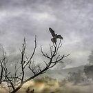 Go Falcons! by Mark Wade