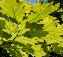 More Than Fifty Shades Of Green - Sunlit Oak and Linden Patterns - Up Right Sticker