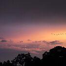 Sunset Flight  by Jessica Jenney