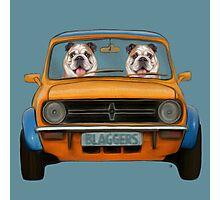 Bulldogs in A Mini  Photographic Print