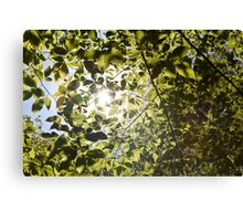 Green Sunlight Canvas Print