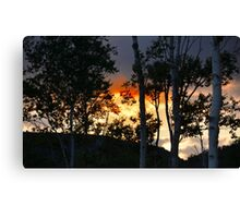 SUNSET ON THE BIRCHES Canvas Print