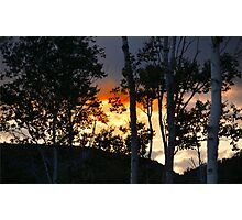 SUNSET ON THE BIRCHES Photographic Print