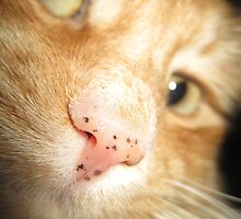 Fuzzball Up Close by kendrabrecka