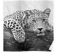 Black and White Leopard Print Poster