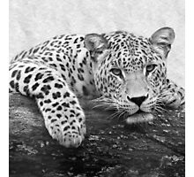 Black and White Leopard Print Photographic Print