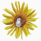 Sunflower and TC t-shirt by Carolyn Clark