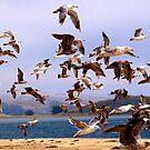 Sky full of gulls by the57man