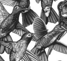 Hummingbird Dance in Sharpie (Grayscale Edition) Sticker