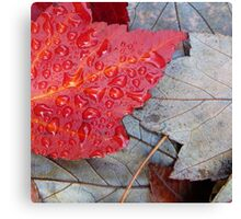 Red Sunset Maple Canvas Print