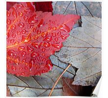 Red Sunset Maple Poster
