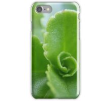Succulent Sedum iPhone Case/Skin