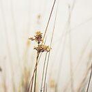 Bulrush by Karen E Camilleri