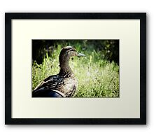 The Uninvited Lunch Guest Framed Print