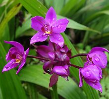 Tropical Purple Orchids by hummingbirds