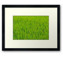 Champs de riz au Japon (Août) Framed Print